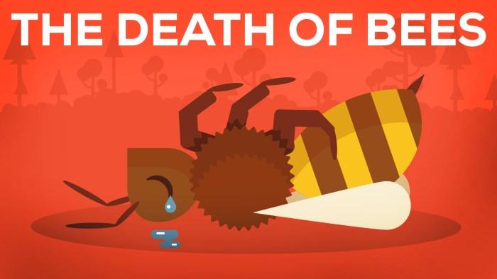 Animação mostra a importância das abelhas e por que elas estão morrendo