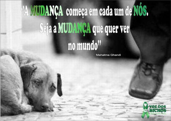 A Voz dos Bichos, uma ONG a serviço da vida animal em Porto Seguro