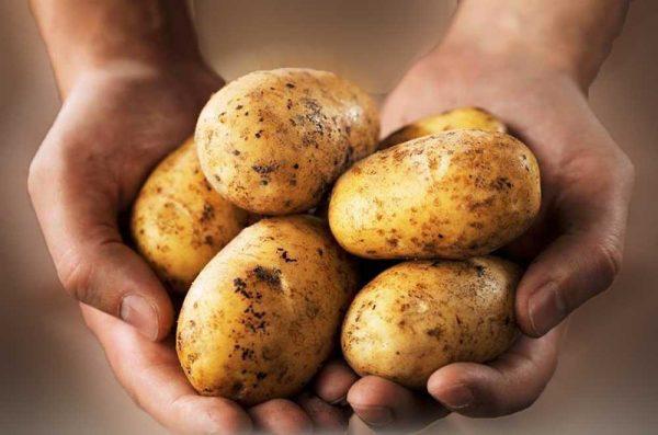 O senhor das batatas