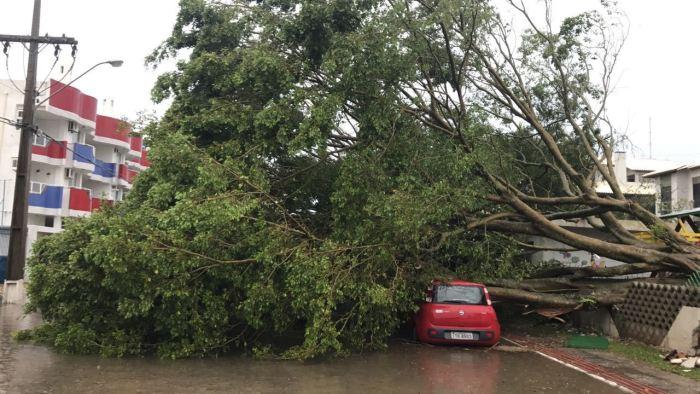 Vendaval destelha casas e arranca árvores no Norte da Ilha