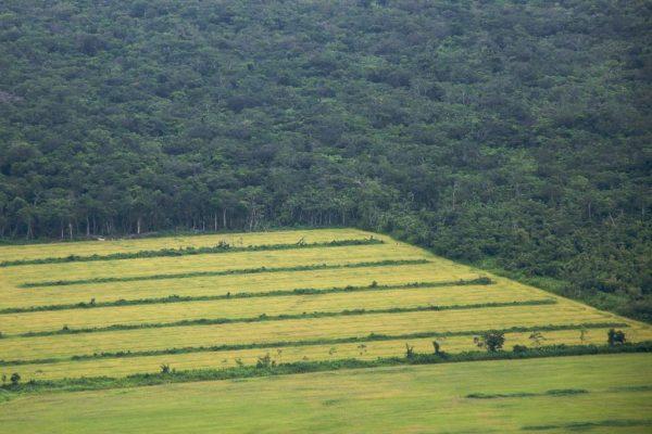 Brasil tem mais latifúndios que áreas protegidas