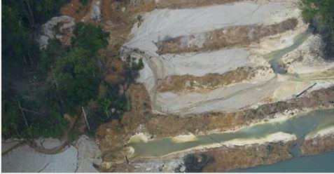 Deputados podem aprovar hoje esquartejamento da floresta na Amazônia