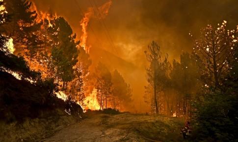 Portugal: as causas ocultas do mega-incêndio