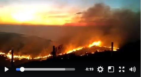 Área de Butiazais na Praia D'Água em Imbituba/SC foi incendiada neste domingo