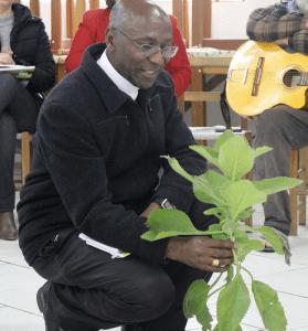 Plantas medicinais para cuidar da vida