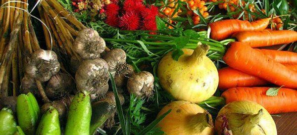 'Agroecologia é a esperança plantada na ciência, movimento e prática'