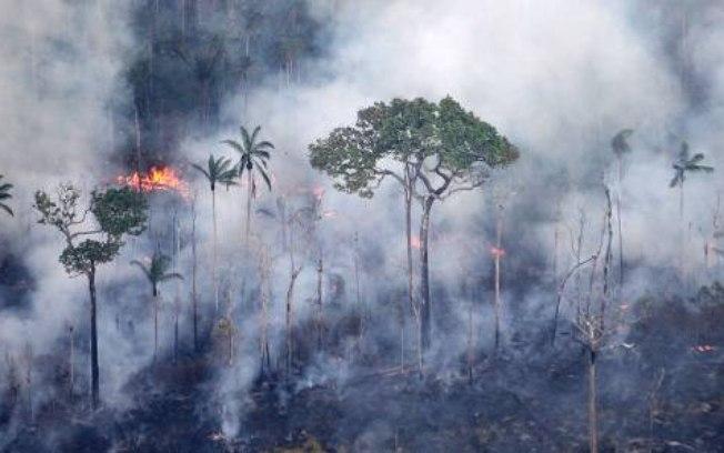 Poluente emitido pela queima de biomassa causa dano ao DNA e morte de célula pulmonar