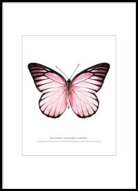 Poster and prints with butterfly | Prints with insects and ...