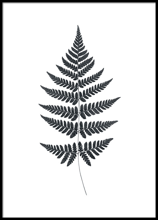 Black and white poster / print of a fern Prints of plants