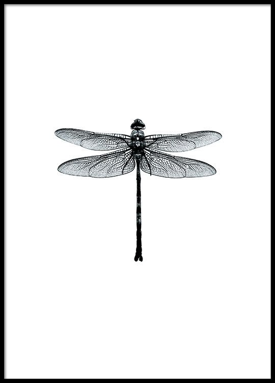 Black and white Wall art Dragonfly poster Desenio