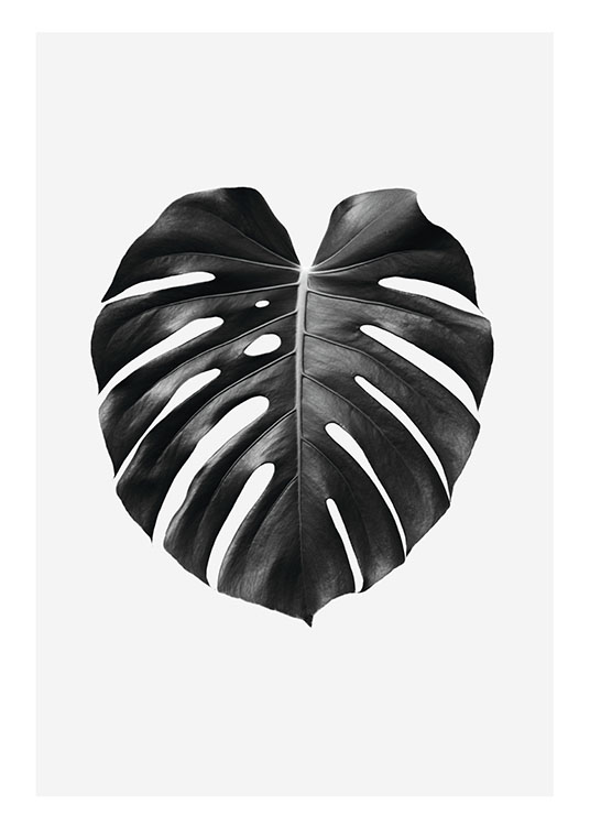 Black and white prints and posters Botanical prints for