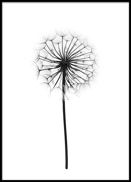 Bilder Print Botanical Poster | Poster With Photograph Of A Dandelion