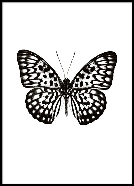 Bilder Print Poster With A Black And White Butterfly, Print Online