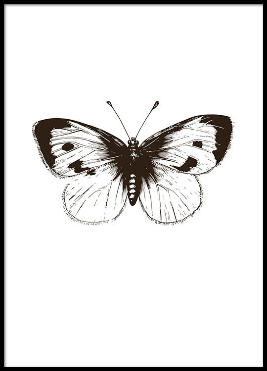 Bilder Print Black And White Poster With An Illustration Of A Butterfly