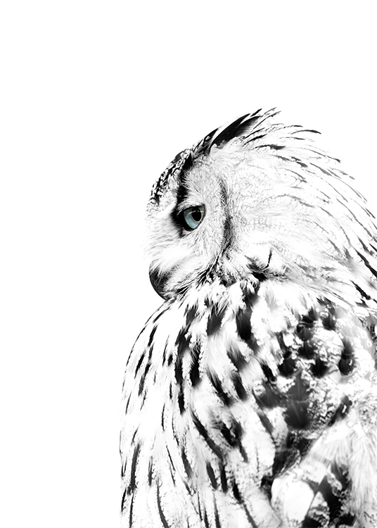 Bilder Print Photo Poster With A White Owl | Scandinavian Prints | Desenio