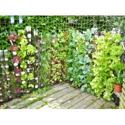 Small Crop Of Best Vegetables For Vertical Gardening