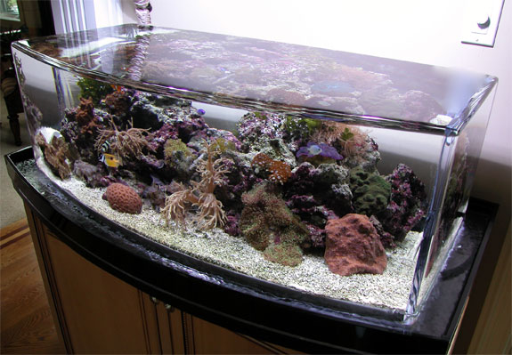 Zero Edge (above)?then the classy high design aquariums by Fluval