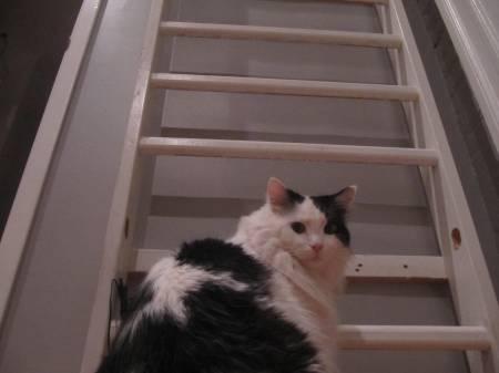 Build Cat Ladder