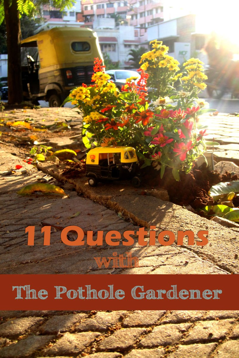11 Questions with The Pothole Gardener