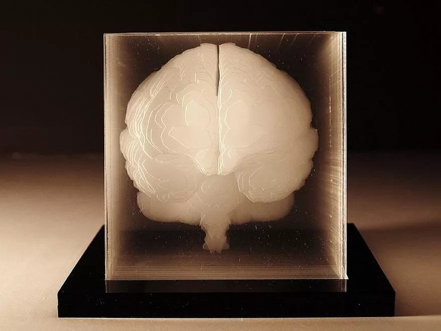 Arik Levy Human Brain Acrylic Sculpture By Northup. - Design Is This