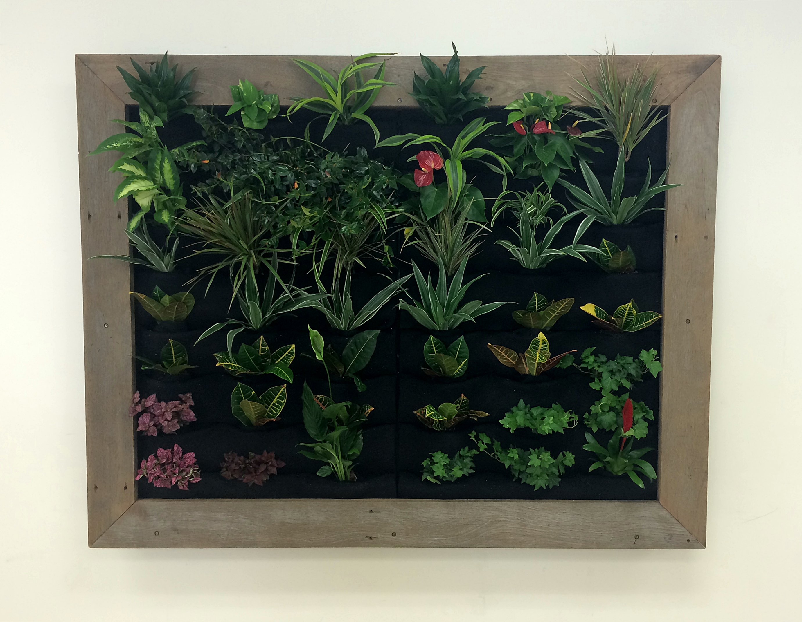Cubicle Wall Planter Plants