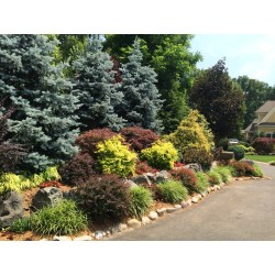 Small Crop Of Evergreen Landscape And Design