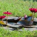 Sanjay Gandhi National Park- Borivali