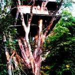 A Tree House in Wayanad Kerala