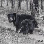 Satpura National Park: Wildlife Heaven