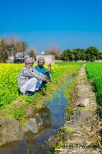 Sarson Ke Khet: Mustard Fields