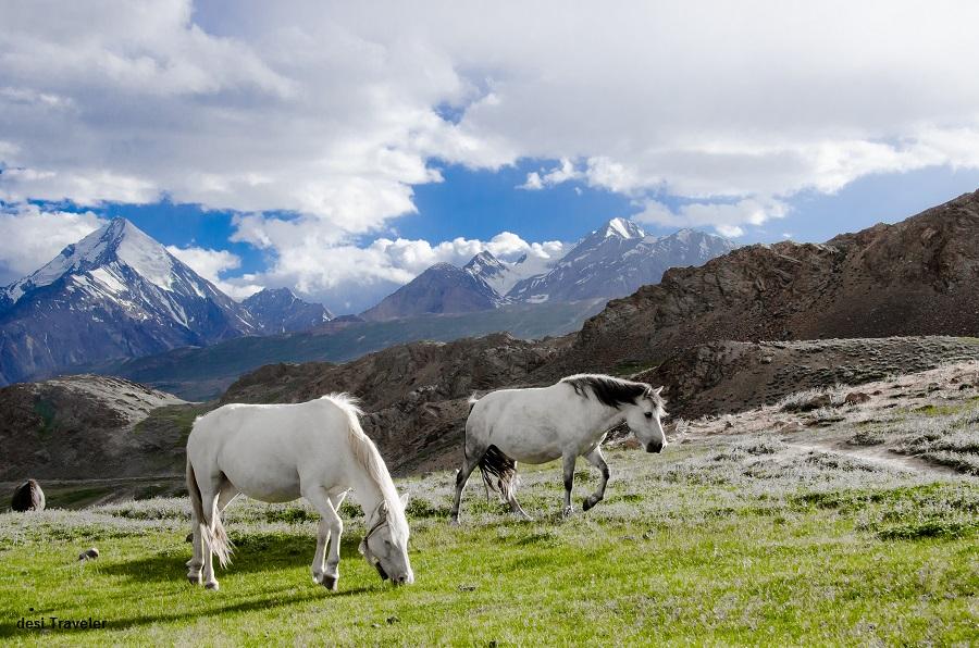 Horses near Chandratal Spiti
