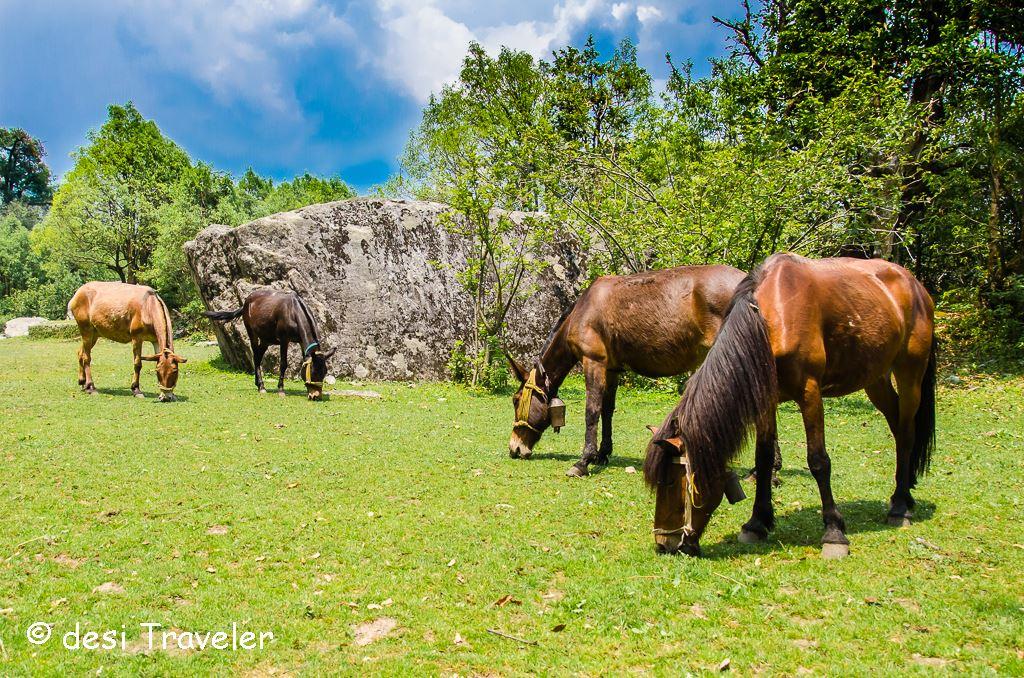 horses Himalayas meadows
