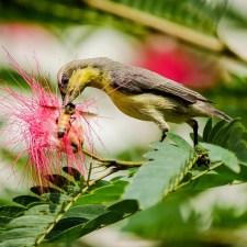 Photographing Birds In Backyard