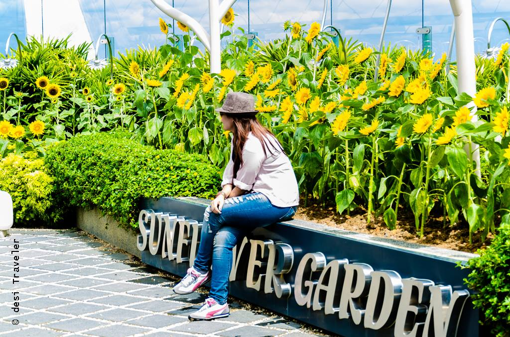 Things to do see Changi Airport - Sunflower Garden