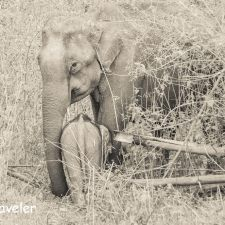Human Elephant Conflict: Watching Wild Elephants in Wayanad NH 212