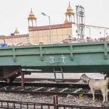 Train To Rajasthan