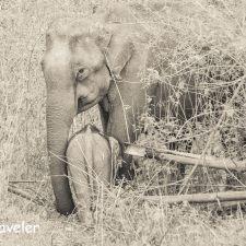 Human Elephant Conflict: Watching Wild Elephants in Wayanad NH 212