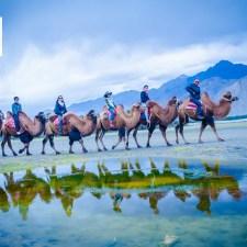 June 2017 Calendar Download Desktop Wallpaper Double Humped Bactrian Camels