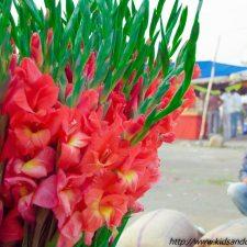 Gudimalkapur Flower Market Hyderabad