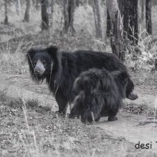 Wildlife Seen in Satpura National Park Madhya Pradesh India