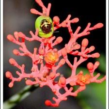 Visit To Botanical Garden In Kondapur Hyderabad