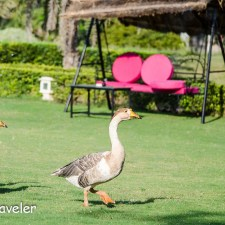 Birds, Bees, Flowers and Nature Watch at Pushkar Resorts Rajasthan