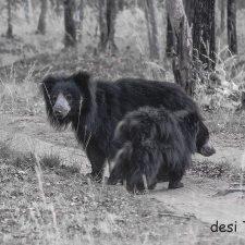 Wildlife Seen in Satpura National Park Madhya Pradesh India