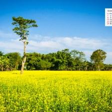 October 2017 Calendar Desktop Wallpaper – Sarson Ke Khet Majuli Assam