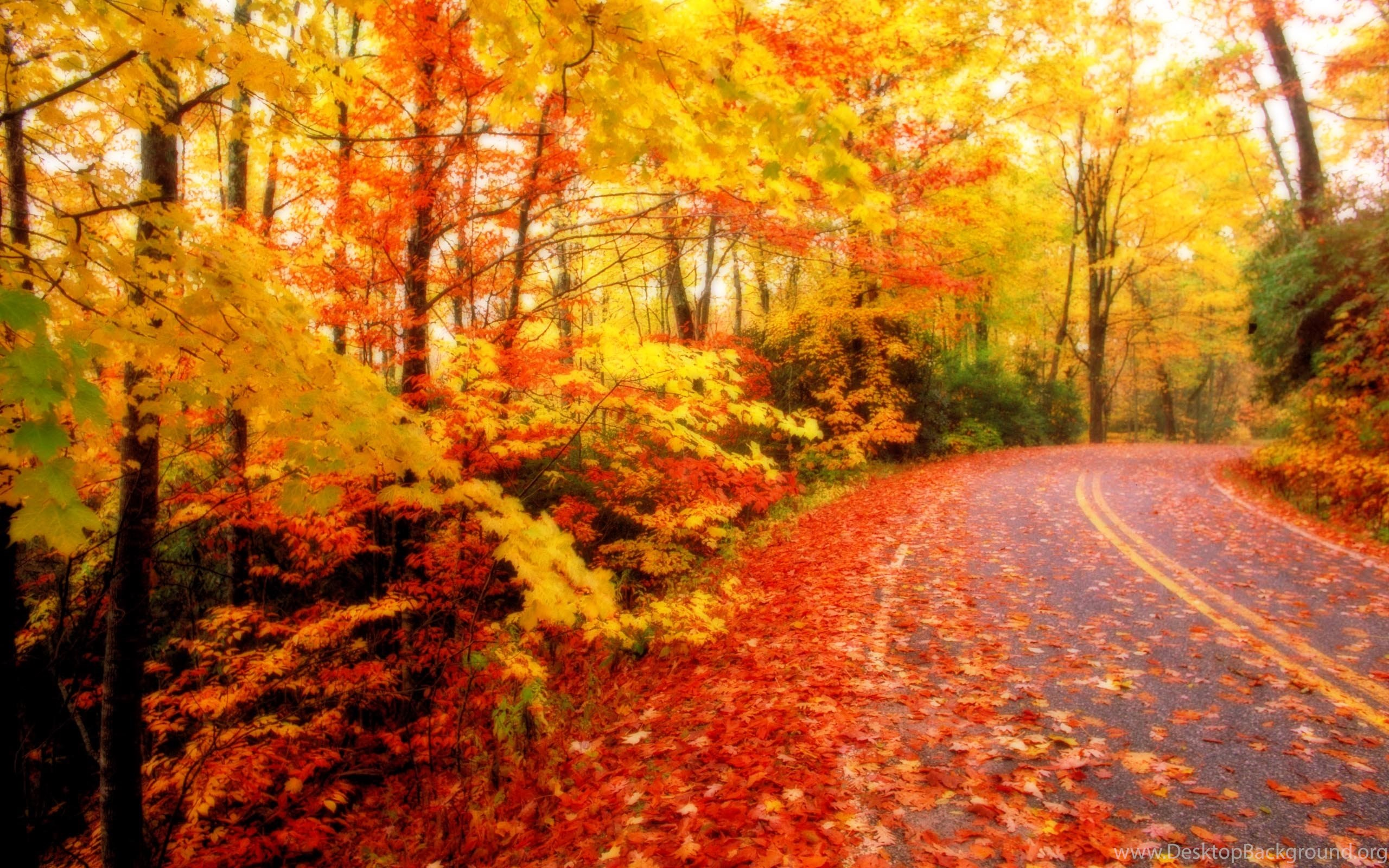 Fall Android Wallpaper Fall Leaf Android Wallpapers Attachment 11000 Amazing Wallpaperz