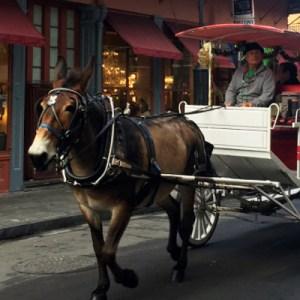 Nova Orleans: um cantinho europeu nos Estados Unidos