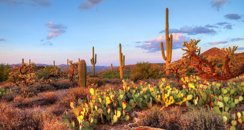 Fall Succulent Wallpaper Destination Wedding Insider Phoenix Scottsdale