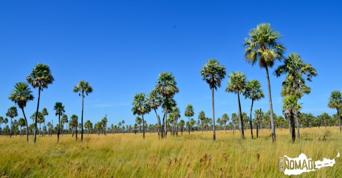 Sabana de palmares, Parque Nacional Río Pilcomayo