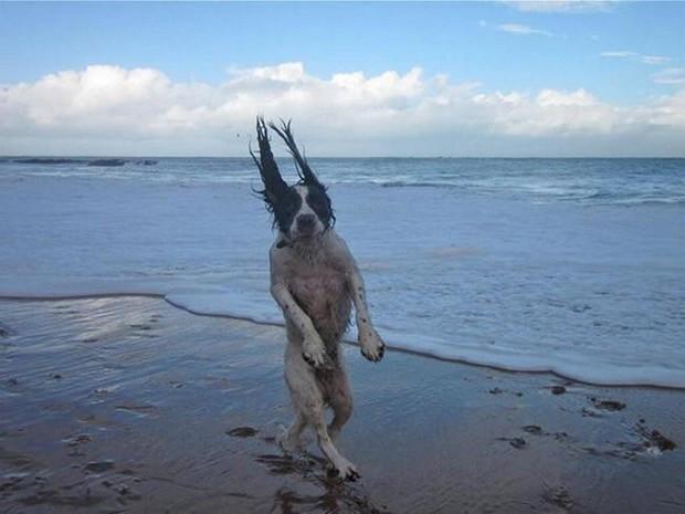 wtf-dog-photos-15