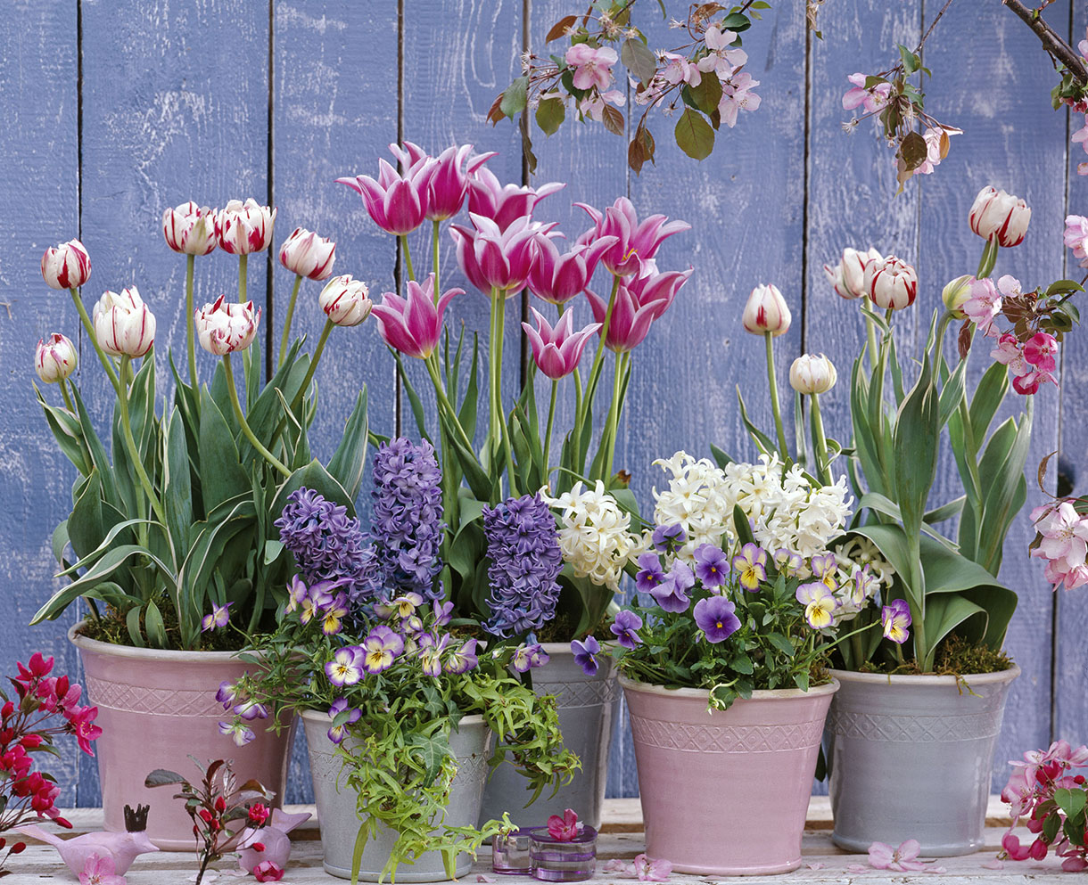 Idee Jardiniere Printemps Bulbes De Printemps 5 Idées D 39associations En Pot